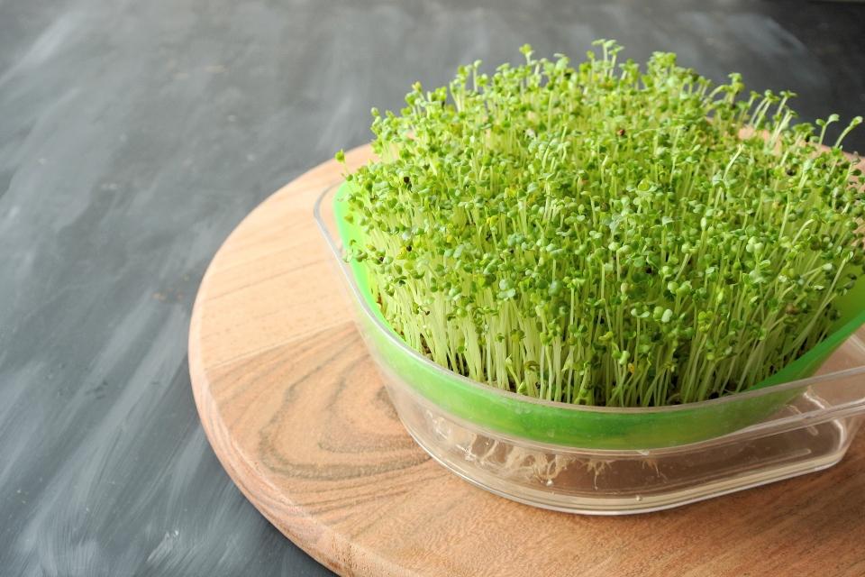 brokolicové klíčky