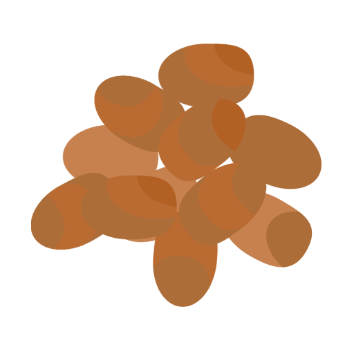 šošovica